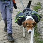 آموزش راه رفتن صحیح با سگ