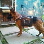 کنترل انرژی سگ