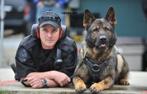 آموزش تربیت سگ نگهبان