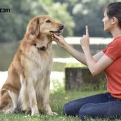 کتاب جامع تربیت سگ از تولگی تا بزرگسالی
