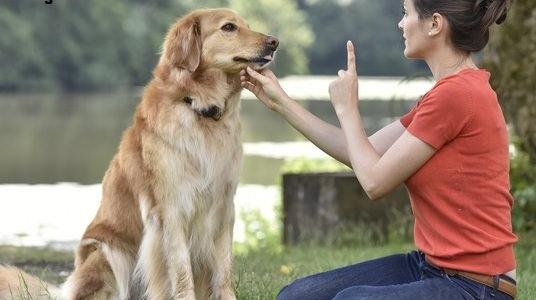 دانلود کتاب تربیت سگ از تولگی تا بزرگسالی