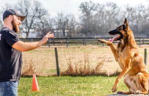 کتاب آموزش تربیت سگ