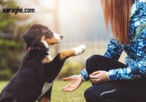 دانلود کتاب تربیت سگ رایگان